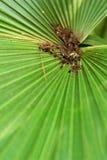 El verde deja puro brillante en naturaleza Fotografía de archivo