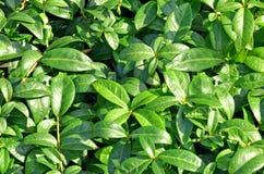 El verde deja textura de la pared Imagen de archivo