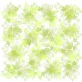 El verde descolorado deja el fondo Fotografía de archivo libre de regalías