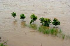 El verde en la inundación Foto de archivo libre de regalías