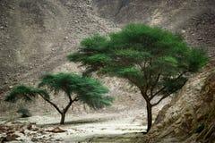 El verde entre desierto Fotografía de archivo libre de regalías