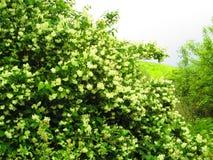 el verde está viniendo Imagen de archivo