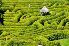 El verde forra el laberinto, laberinto del seto Foto de archivo libre de regalías