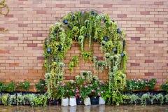 El verde fresco de la primavera sale de la planta sobre fondo de la pared de ladrillo Foto de archivo