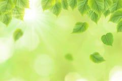El verde fresco deja el fondo Fotografía de archivo libre de regalías