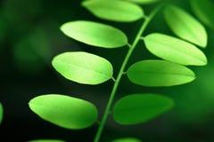 El verde fresco deja el fondo Imagen de archivo