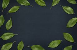 El verde fresco deja la composición en la pizarra Capítulo de hojas en fondo oscuro Visión superior, endecha plana Foto de archivo