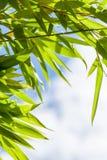 El verde fresco se va contra un cielo azul nublado Imagenes de archivo