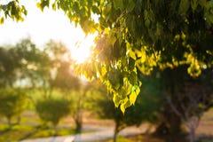 El verde fresco se va en la naturaleza que enmarca el sol en el centro y que forma rayos de la luz Imágenes de archivo libres de regalías
