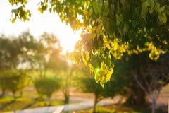 El verde fresco se va en la naturaleza que enmarca el sol en el centro y que forma rayos de la luz Foto de archivo