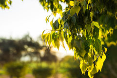 El verde fresco se va en la naturaleza que enmarca el sol en el centro y que forma rayos de la luz Imagen de archivo libre de regalías