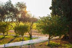 El verde fresco se va en la naturaleza que enmarca el sol en el centro y que forma rayos de la luz Fotografía de archivo