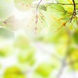 El verde fresco se va sobre el fondo borroso, luz del sol, primavera Fotografía de archivo
