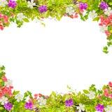El verde hermoso deja el marco con la flor en el fondo blanco fotos de archivo