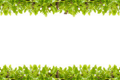 El verde hermoso deja el marco en el fondo blanco, backgr abstracto imágenes de archivo libres de regalías
