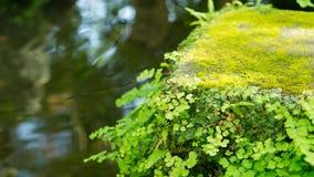 El verde hermoso se va con la charca en el backgr de Japón del templo del hasedere Imágenes de archivo libres de regalías