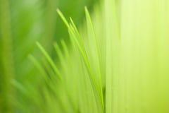 El verde hojea textore Foto de archivo libre de regalías