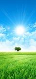 El verde le gusta un prado en el sol Foto de archivo