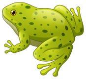 El verde manchó la rana aislada en el fondo blanco libre illustration