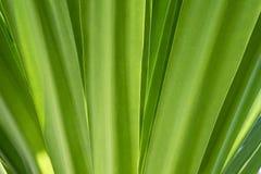 El verde natural deja el fondo Fotografía de archivo libre de regalías
