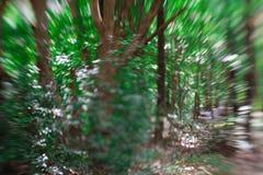 El verde natural deja el fondo verde abstracto del bokeh fotos de archivo