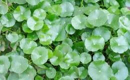 El verde se va en fondo y texturas de la naturaleza Fotografía de archivo libre de regalías