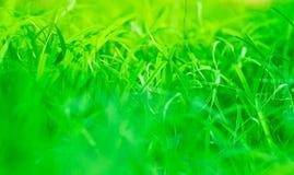 El verde se va en la mañana del ther, fresca en concepto moring del backgroud Fotos de archivo libres de regalías