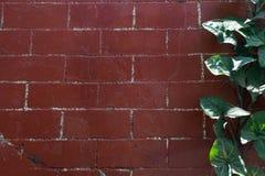 El verde se va en el lado de una pared de ladrillo marrón Fotografía de archivo