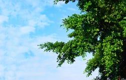 El verde se va en sol en el fondo del cielo azul, texto en blanco Fotos de archivo