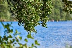 El verde se va en una rama con el lago en el fondo Imagen de archivo libre de regalías