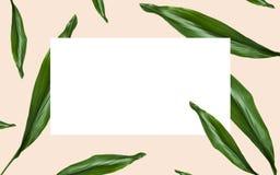 El verde se va sobre el espacio en blanco blanco en beige Fotos de archivo libres de regalías