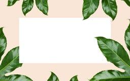 El verde se va sobre el espacio en blanco blanco en beige Foto de archivo libre de regalías
