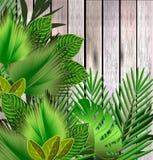 El verde tropical deja el ejemplo sobre la madera stock de ilustración