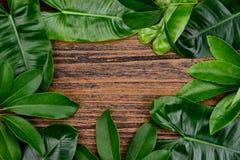 El verde tropical deja el fondo en marco de madera con el espacio de la copia en el centro, concepto natural del modelo imagenes de archivo