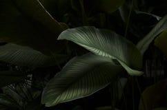 El verde tropical hermoso sale del jardín imagen de archivo