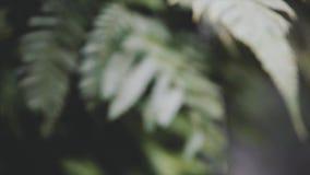 El verde tropical se va en selvas exóticas mojadas cerca de la cascada, alrededor de bosque salvaje de la naturaleza en el día de almacen de video