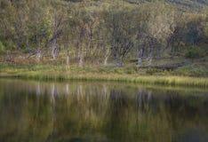 El verde y el otoño colorearon el bosque del abedul que reflejaba en el agua de río Fotos de archivo