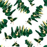 El verdor del eucalipto sale del modelo inconsútil Imagen de archivo libre de regalías