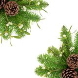El verdor del invierno confina Imagen de archivo libre de regalías
