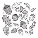 El vestor de las bellotas y de las hojas del roble fijó en estilo del boho ilustración del vector