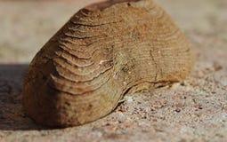El vetear de un pedazo de madera Foto de archivo libre de regalías
