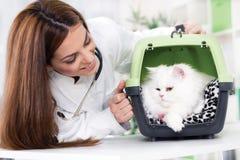 El veterinario con el estetoscopio calma el gato persa fotos de archivo