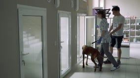 El veterinario de la muchacha muestra un lugar en la enfermería de los animales para un perro metrajes
