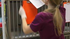 El veterinario de la mujer joven pone un pequeño perro en la jaula almacen de video