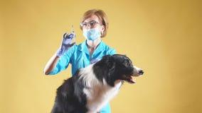 El veterinario de sexo femenino profesional está dando una inyección almacen de metraje de vídeo