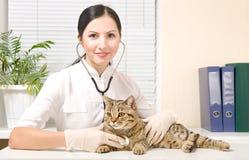 El veterinario escucha gato del estetoscopio foto de archivo