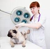 El veterinario hace el perro vacunado a una clínica veterinaria Foto de archivo