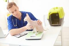 El veterinario joven alegre está examinando un animal doméstico foto de archivo libre de regalías