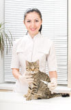 El veterinario mide la temperatura de un gatito Fotografía de archivo libre de regalías