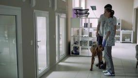 El veterinario muestra a muchacho la enfermería de los animales para un perro metrajes